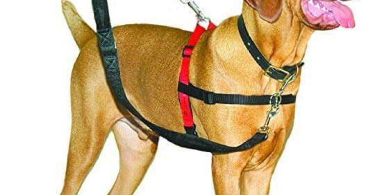 Company of Animals HALTI Dog Harness