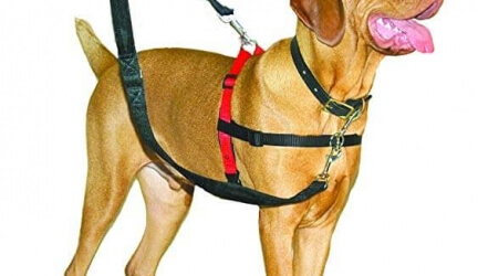 Company of Animals HALTI Dog Harness