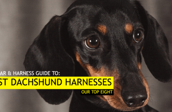 Best Harness for Dachshunds – Our Top 8 Dog Harness Picks