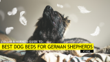 5 Best Dog Beds for German Shepherds