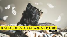 5 Best Dog Beds for German Shepherds