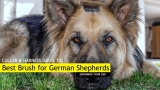 Best Dog Brush for German Shepherds