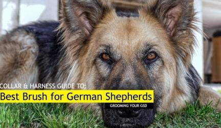 Best Dog Brush for German Shepherds