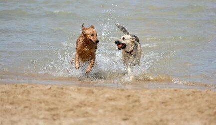 Best Dog Friendly Beaches in the UK – Tried and Tested