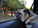 Best Dog Seat Belts and Harnesses (Our 14 for Keeping Safe in the Car)