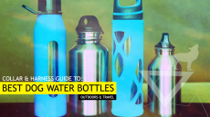 Best Dog Water Bottles (For Outdoors and Travel – Our Top 7 Picks)