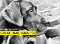 Our 6 Best Great Dane Harnesses