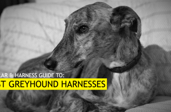 Best Harness for Greyhounds (Our 5 Top Picks for 2019)