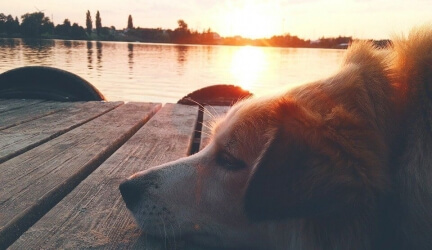 Best Dog Cooling Vests (Our Top 6 – Tried and Tested)