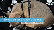 Best French Bulldog Dog Beds – Our Top 8 Frenchie Beds