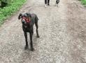 Dog Head Collars – A Beginner's Guide