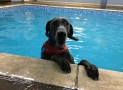 Does my dog need a life vest? A Starter Guide to Dog Life Jackets