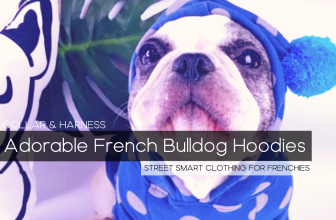 9 Adorable French Bulldog Hoodies – The Best in Style for your Frenchie