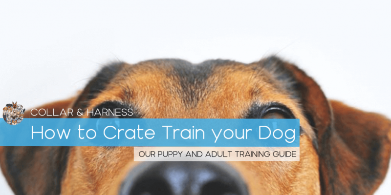 How To Crate Train Your Dog (Our Puppy and Adult Guide)
