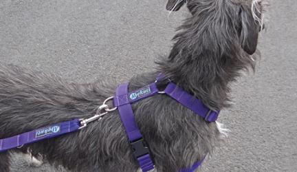 Mekuti Balance Dog Harness