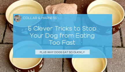 5 Clever Tricks to Stop Your Dog from Eating Too Fast (Bowls, Toys & DIY Ideas)