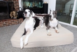 Best Dog Bed for Great Dane (Our Top 5 Beds in 2019 Reviewed)