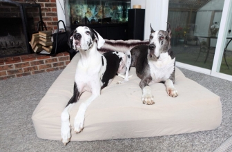 Best Dog Beds for Great Danes (Our Top 5 XXL Bed in 2019 Reviewed)