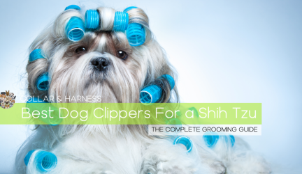 Best Dog Clippers for a Shih Tzu – Doggy Hairdo Like a Pro