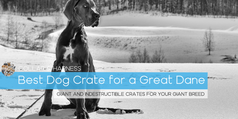 Best Dog Crate for a Great Dane (Plus Our Crate Training Guide)