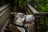 Best Dog Head Halter – Our Top 7 Head Collars – Tried & Tested