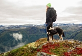Best Dog Harness for Hiking (Our 9 Choices for 2019)
