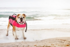 Best Dog Life Jacket (Our Top Choices for 2019 – Reviewed)