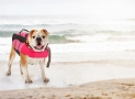 Best Dog Life Jacket (Our Top 7 for 2019 – Reviewed)