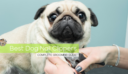 Best Dog Nail Clippers – The Complete Grooming Guide