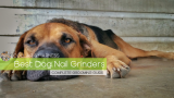 Best Dog Nail Grinder – Our Top 9 – Complete Grooming Guide