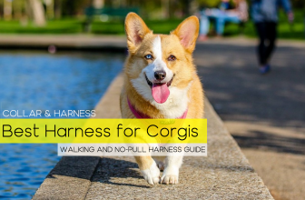 Best Harness for a Corgi – Our Top 6 Picks