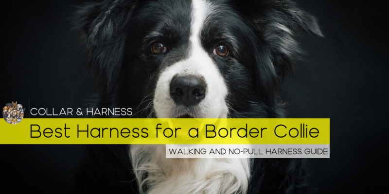 Best Harness for a Border Collie – Our Top 7 Picks – Reviewed
