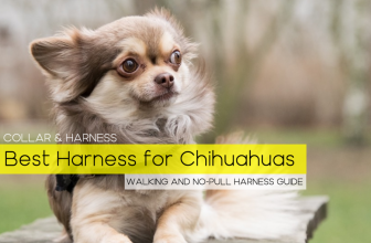 The 6 Best Harnesses for Chihuahuas (Our Top Picks – Reviewed)