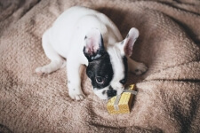 7 Best Personalised Dog Gifts for 2019