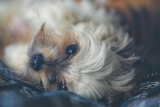 PETA's Awards for Best Vegan Dog Collar and Harnesses 2018