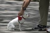 9 Best Dog Leads that Stop Pulling