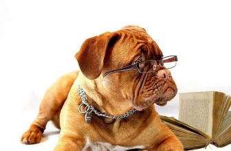 Frequently Asked Questions About Dog Collars and Harnesses