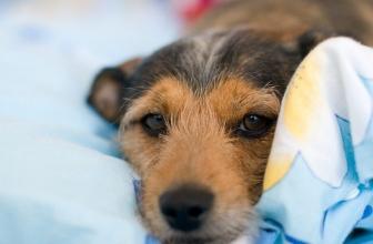 Handmade Dog Beds UK – Our 8 Favourite Picks
