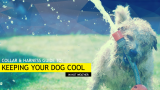 How to Cool Down your Dog (& Keep Them Cool) this Summer