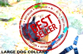 Best Dog Collars for Large Dogs (Our Top 5 Trending in 2019)