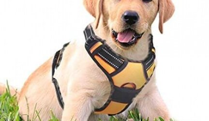 Rabbitgoo No-Pull Dog Harness