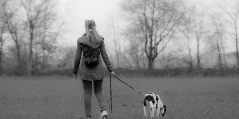 Dog Leads – What's Best for Your Dog?